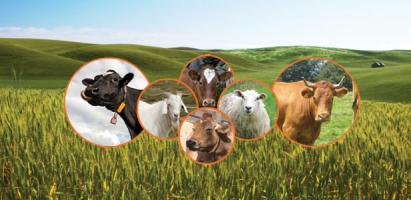 Sümer Süt Ürünleri Sanayi