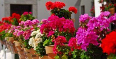 Buhara Çiçekçilik